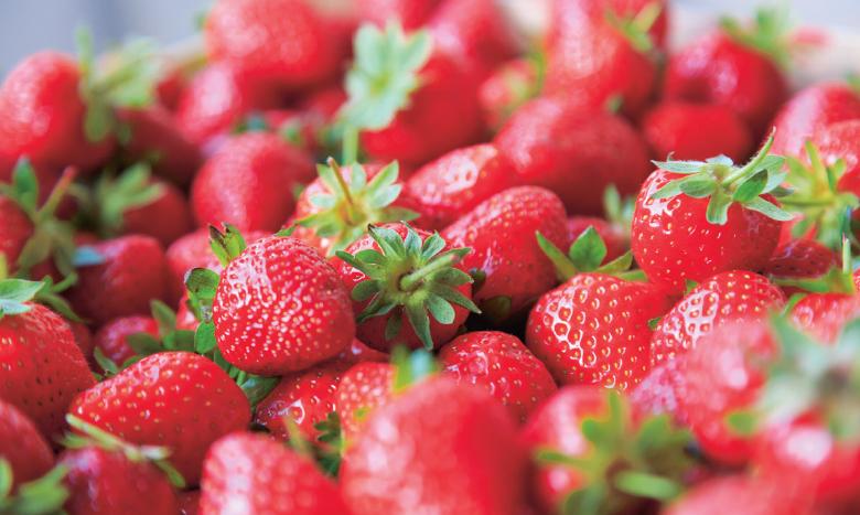 Erdbeerbalsam piattoforte